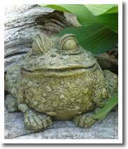 Frog in the hostas