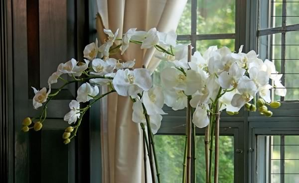 Stunning orchids